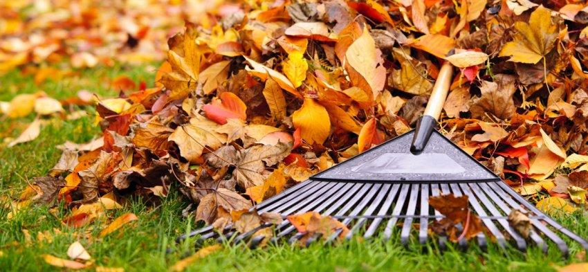 Faire ramasser les feuilles de son jardin
